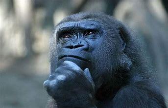 deep thinker